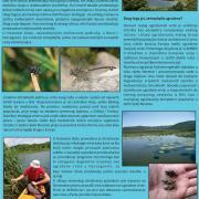 PDF o istraživanju populacije Lindenia tetraphylla u Hutovom blatu